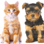 How to set the best pet policy in Chula Vista